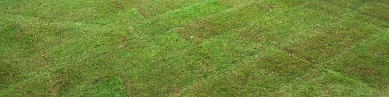 Aeration / Scarification Service